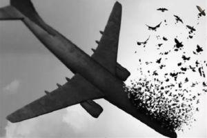 اسامی شهدا و شرح آنچه در پرواز اوکراینی اتفاق افتاد
